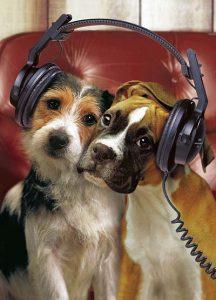 dogheadphones